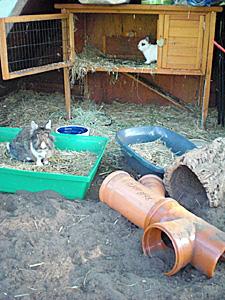 gehege kaninchen selber bauen